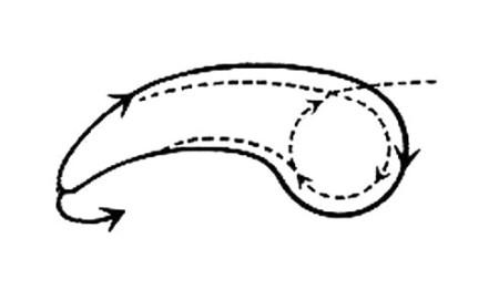 protoorg3